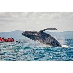 Весь Эквадор плюс горбатые киты